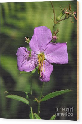Wood Print featuring the photograph Green Lynx Spider On Meadow Beauty by Peg Urban