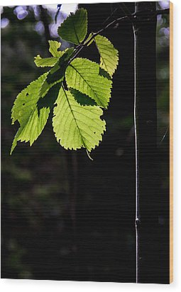 Wood Print featuring the photograph Green by Odd Jeppesen