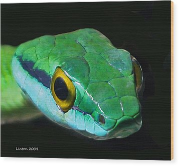 Green Parrot Snake Wood Print by Larry Linton
