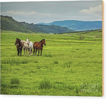 Green Pastures Wood Print by Jon Burch Photography