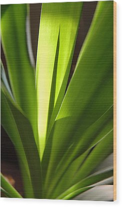 Green Patterns Wood Print by Jerry McElroy