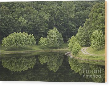 Green Reflections Wood Print by Andrea Silies