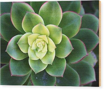 Green Sunburst Wood Print
