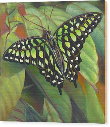 Green Tailed Jay Butterfly Wood Print