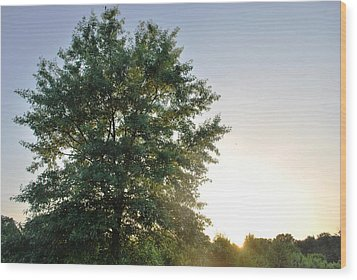 Green Tree Bright Sunshine Background Wood Print