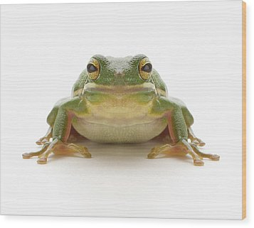 Green Tree Frog (hylidae Cinerea) Wood Print by Don Farrall