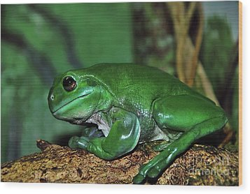 Green Tree Frog With A Smile Wood Print by Kaye Menner