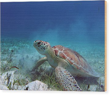 Green Turtle Wood Print by Kimberly Mohlenhoff