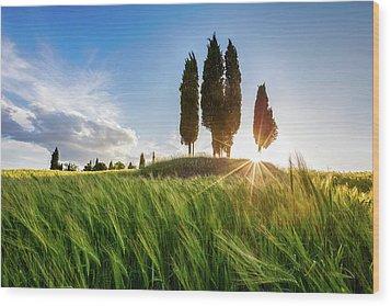Green Tuscany Wood Print by Evgeni Dinev