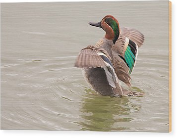 Wood Print featuring the photograph Green-winged Teal by Ram Vasudev