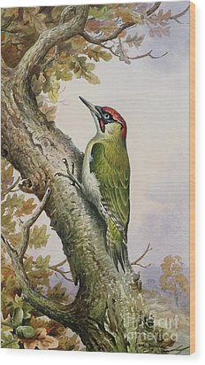 Green Woodpecker Wood Print by Carl Donner