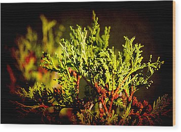 Wood Print featuring the photograph Green World by Milena Ilieva