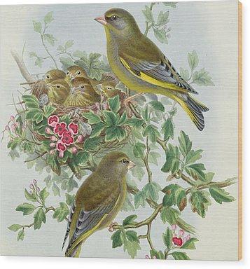 Greenfinch Wood Print by John Gould