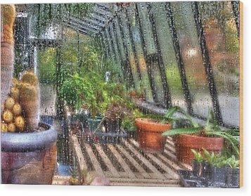 Greenhouse - In A Greenhouse Window  Wood Print by Mike Savad
