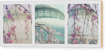Wood Print featuring the photograph Greenhouse Blossoms Triptych by Jessica Jenney