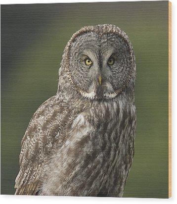 Great Gray Owl Portrait Wood Print by Doug Herr