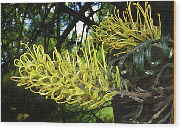 Wood Print featuring the photograph Grevillea Sandra Gordon by Odille Esmonde-Morgan