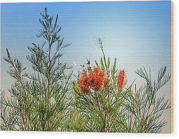Grevillea With Moon Wood Print