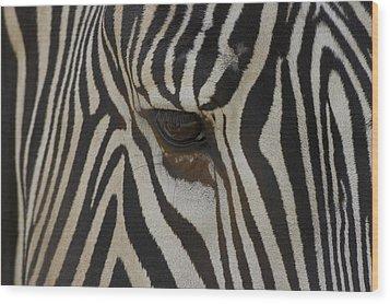 Grevys Zebra Equus Grevyi Close Wood Print by Zssd