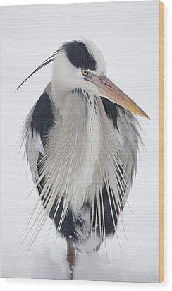 Grey Heron In The Snow Wood Print