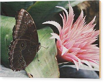 Grey Pansy Pink Bromeliad Wood Print