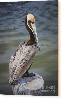 Grey Pelican Wood Print by Inge Johnsson