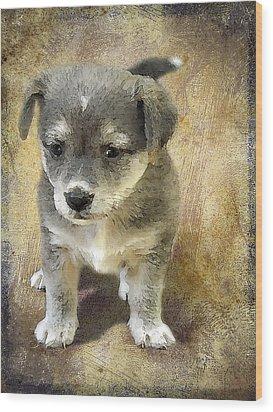 Grey Puppy Wood Print by Svetlana Sewell