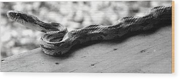 Grey Rat Snake Wood Print