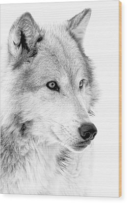 Grey Wolf Profile Wood Print by Athena Mckinzie