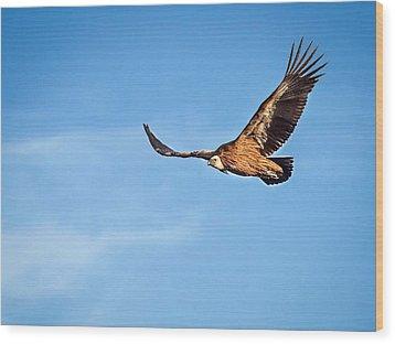 Griffon Vulture Wood Print by Meir Ezrachi