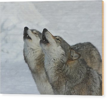 Grizzer And Maya Howling Wood Print by Gerry Sibell