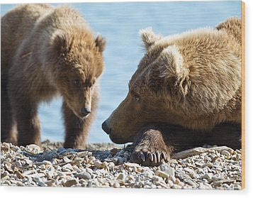 Grizzly And Cub Wood Print by Brandon Broderick