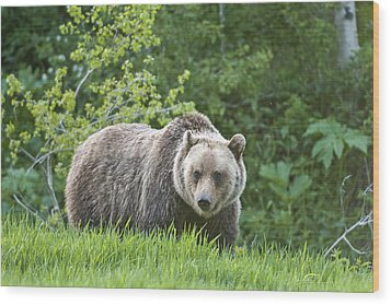 Wood Print featuring the photograph Grizzly Bear by Gary Lengyel