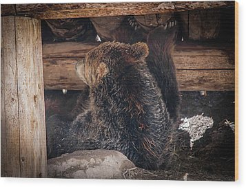 Grizzly Bear Under The Cabin Wood Print by Dan Pearce