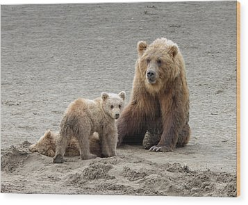 Wood Print featuring the photograph Grizzly Family by Phil Stone