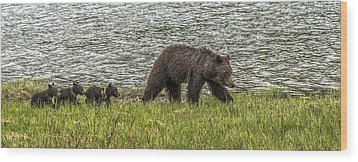 Wood Print featuring the photograph Grizzly Family by Yeates Photography