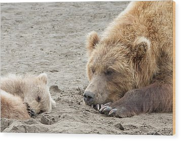 Grizzly Mom And Cub Wood Print by Phil Stone