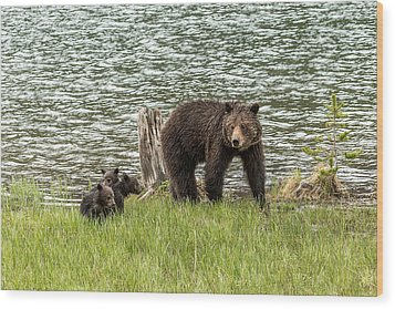 Wood Print featuring the photograph Grizzly Mom And Cubs by Yeates Photography
