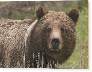 Grizzly Portrait Wood Print by Steve Stuller