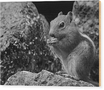 Wood Print featuring the photograph Ground Squirrel  by Christina Lihani