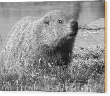 Groundhog Wood Print by Erika Kennedy