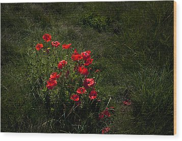 Group Of Poppies Wood Print by Svetlana Sewell