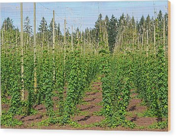 Growing Hops Wood Print
