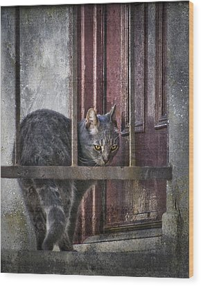 Wood Print featuring the photograph Grunge Cat by Kevin Bergen