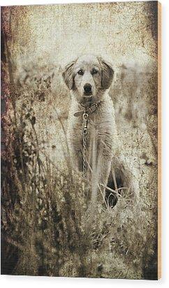 Grunge Puppy Wood Print by Meirion Matthias
