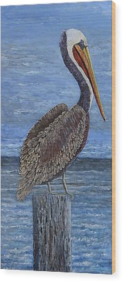 Gulf Coast Brown Pelican Wood Print by Suzanne Theis