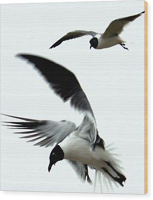 Wood Print featuring the photograph Gulf Gulls by Antonia Citrino