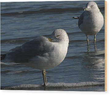Gull At Rest Wood Print by Charles Shedd