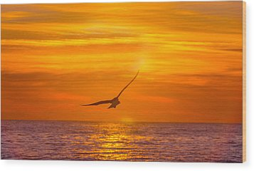 Gull At Sunrise Wood Print by Allan Levin