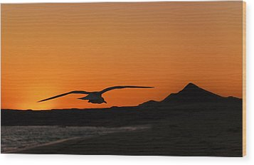Gull At Sunset Wood Print by Dave Dilli